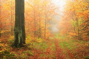 autumnwoods