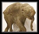 Appreciating Elephants By Becky Rupp