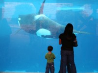 AquariumFamily homeschooling