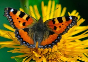 Homeschooling: The Butterfly Approach to Learning